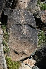 Three Rivers Petroglyphs (5908)
