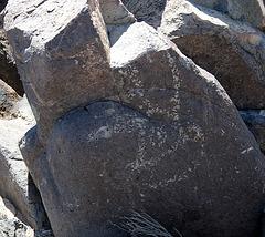 Three Rivers Petroglyphs (5911)