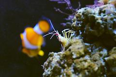 Meister Krabbe und Nemo