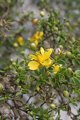 Creosote Bloom (3938)