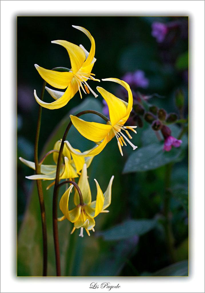 Une fleur par jour.... 7759193.7e5e4f0d.1024