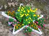 florstelo en Greziljono