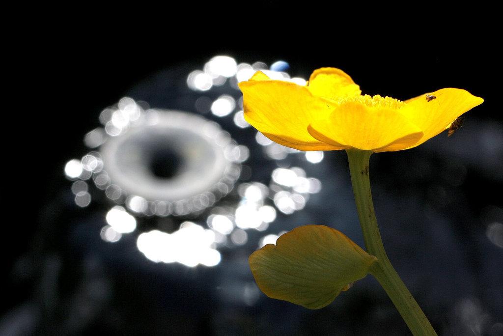 Une fleur par jour.... - Page 3 7819446.f5e9ecc1.1024