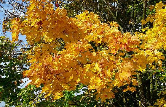 Herbstblätter -