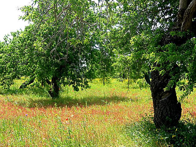 Mandelbäume und bunte Wiesen