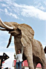 ebria elefanto