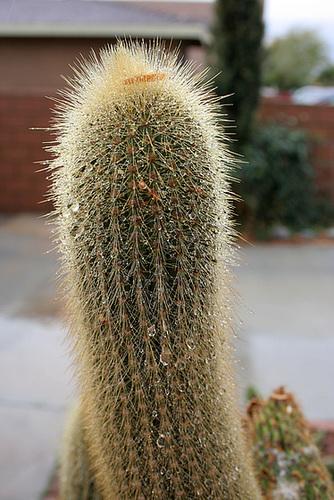 Wet Cactus (3810)