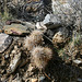 Trail Canyon Cacti (4364)