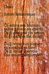 Cezar: Sciuro humuremas (poemfoto)