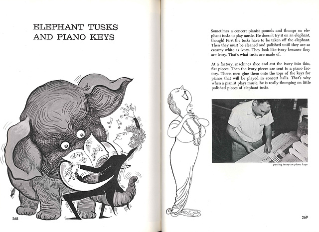 Elephant Tusks and Piano Keys