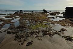 Canggu beach during low tide