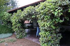 L.A. Garden Tour (6501)