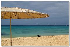 Strandschirm mit Hund