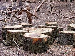 Timber graveyard