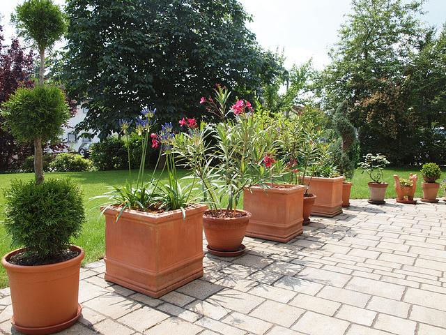 ipernity terrassenpflanzen by ingrid b alias isabella bird. Black Bedroom Furniture Sets. Home Design Ideas