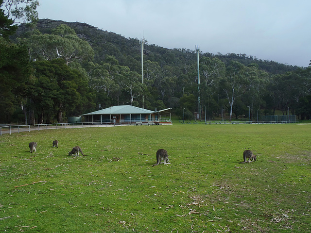 Théo & the kangaroos, part deux