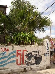 Clôture électrique et palmier / Electric fence and palm tree