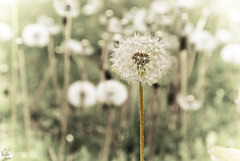 Blow into simplicity | Soplo a la sencillez