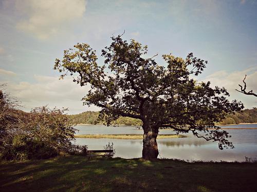 le ptit arbre et l'automne
