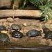 Schildkröten-Gang