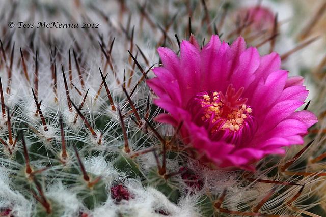 Cactus  203 copy Explore