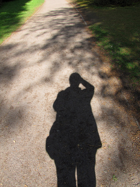 Schatten trägt auf ...