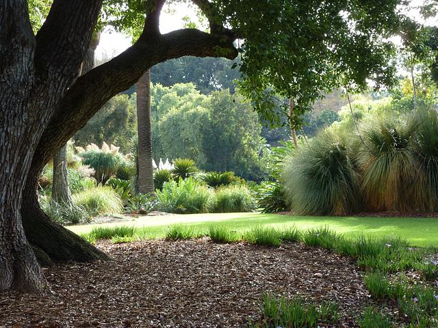 At the Adelaide Botanical Gardens