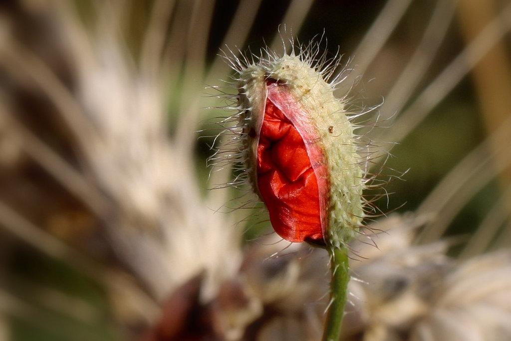 Une fleur par jour.... - Page 3 8644425.5bffa702.1024