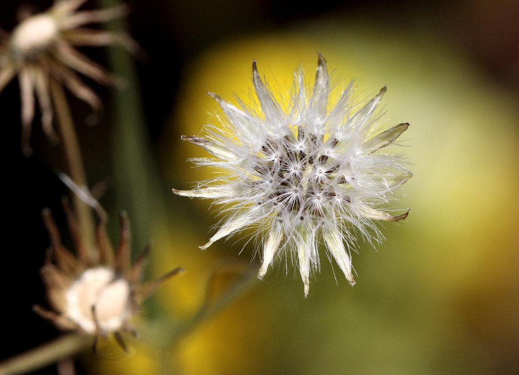 Une fleur par jour.... - Page 2 8584920.26e40b7a.1024