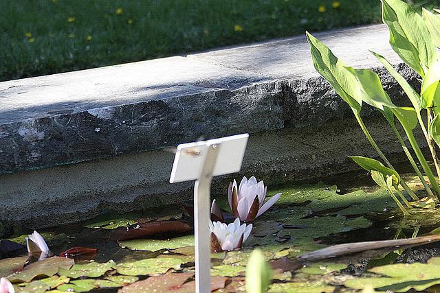 20100616 5828Aw [D~BI] Segellibelle: Vierfleck (Libellula quadrimaculata), Bielefeld