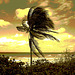 Vent et palmier / Wind and palm tree - Sepia postérisé
