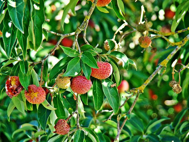 Tree strawberries 2