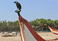 l'oiseau d ' E. POE