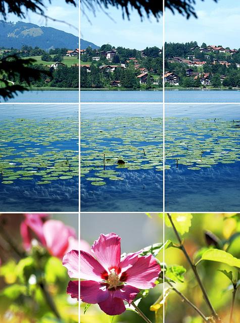 Weissensee. Berge, Wasser, Blumen. ©UdoSm