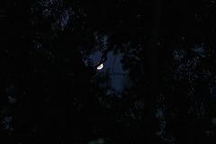 Mond angeln / moon-fishing