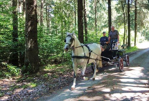 Kutschfahrt durch den Wald