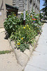 07.PeacePole.FUMC.16P.NW.WDC.18June2010