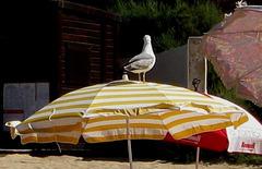 Algarve, Beach of Vau, I take the floor