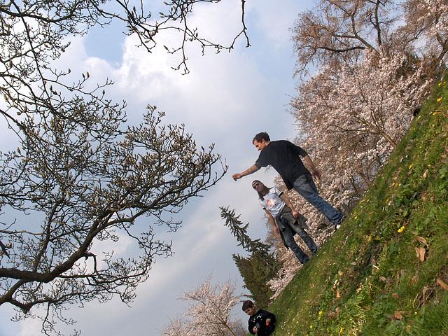 Ein Tag im Kirschblütenland ...