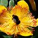 Bee on Wort