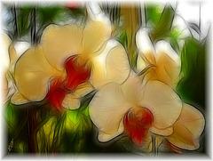 Cultivons la fleur de beauté
