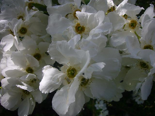unbekannte Blüten in weiß