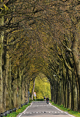 Allee in Holland