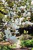 magnolio floranta super pado