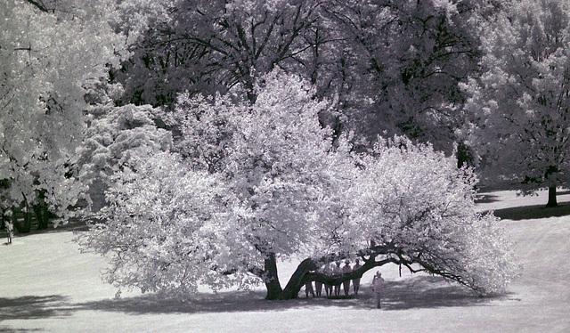 Loose Park (0072)