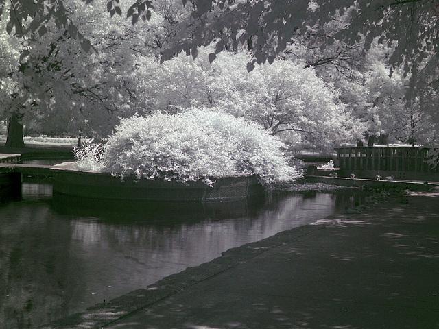 Loose Park (0076)