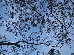 Parc du centre-ville / Downtown park -  Dans ma ville / Hometown - 24 avril 2010