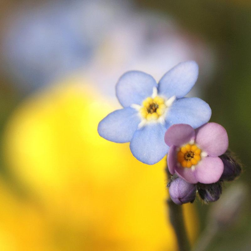 Une fleur par jour.... - Page 2 8099430.f2b93129.800