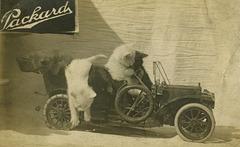 Packard Car Cats