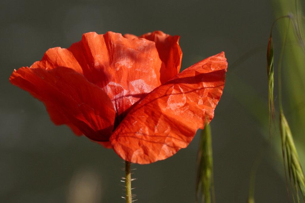 Une fleur par jour.... 8229520.30c3286f.1024